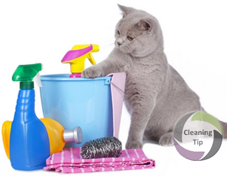 How To Clean Up After Cats Maids By Trade