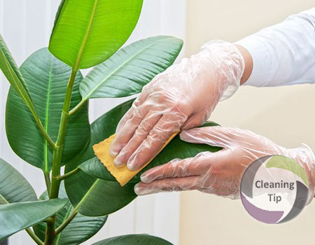 Learn Proper Plant Cleaning Without Causing Damage