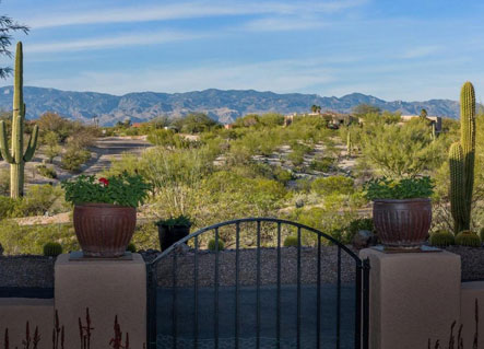 View out of the front gate of a Palo Verde home in Tucson