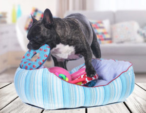 Cleaning Dog Gear—Keeping Fido's Belongings in Check