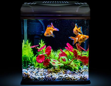 Use-This-Easy-Process-to-Safely-Clean-an-Aquarium1.jpg